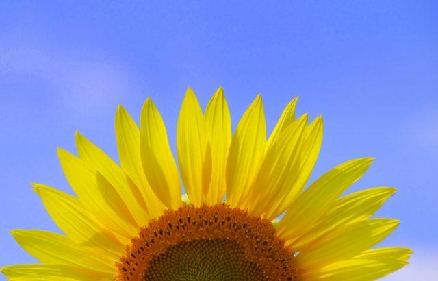 夏の花と言えばひまわり ひまわりと言えばウォールステッカー